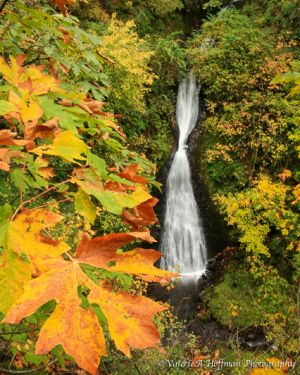 Sheppards Dell Falls, OR.jpg