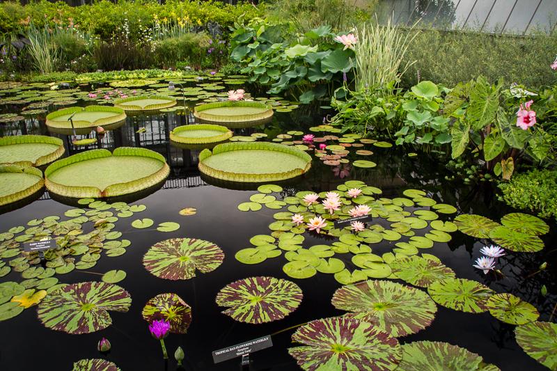 Summer Splendor Giant Water Lilies Dahlias Fountains